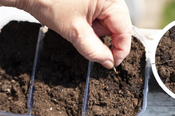 Cómo hacer un semillero - Cómo plantar en semillero