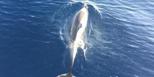 Biodiversidad marina en España