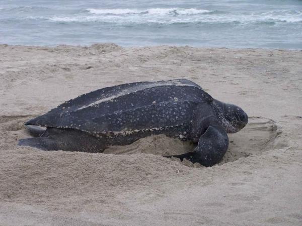 Biodiversidad marina en España - Hábitats y especies marinas
