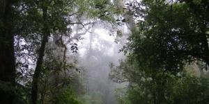 Bosques de niebla: qué son y características