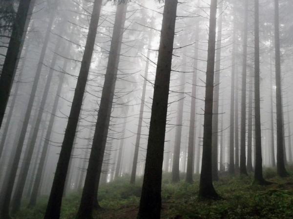 Bosques de niebla: qué son y características - Qué son los bosques de niebla y sus características