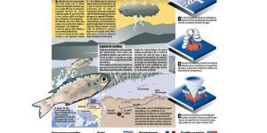 Qué es la lluvia de peces y por qué sucede