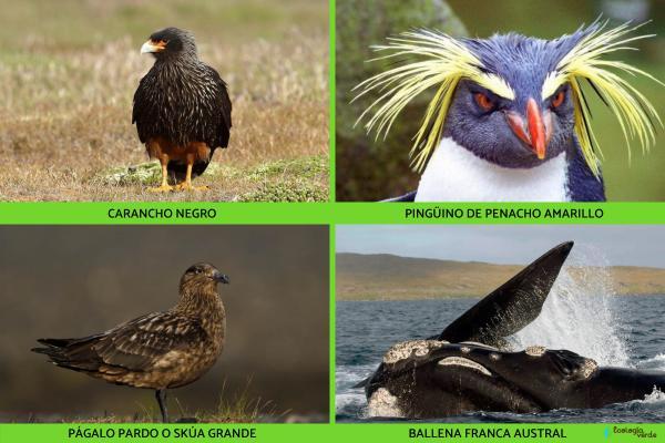 Flora y fauna de las islas Malvinas - Fauna de las islas Malvinas