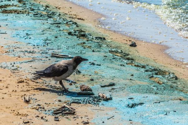 Contaminación química: qué es, causas y consecuencias - Consecuencias de la contaminación química