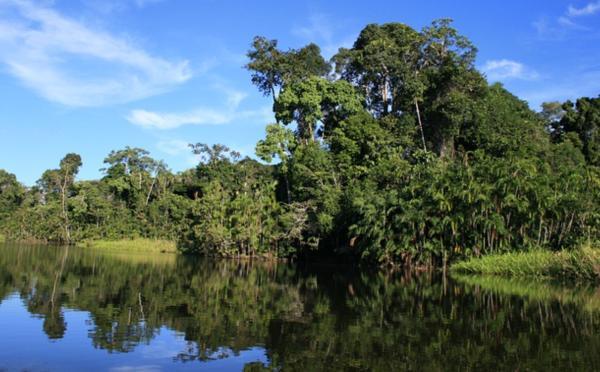Cuáles son las regiones naturales del Ecuador - El Oriente (la selva amazónica)