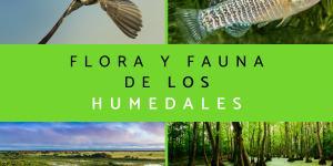 Flora y fauna de los humedales