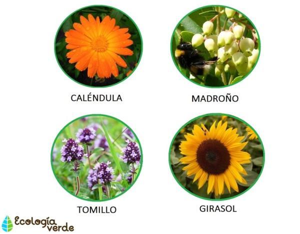 Plantas y flores que atraen abejas - +40 plantas melíferas para apicultura - las flores favoritas de las abejas