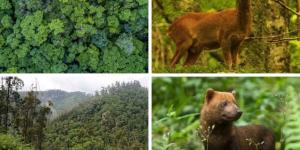 Bosque Atlántico: qué es, características, flora y fauna