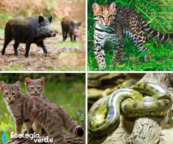 Bosque Atlántico: qué es, características, flora y fauna - Fauna del bosque atlántico - lista de animales