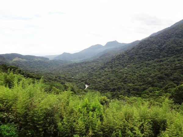 Bosque Atlántico: qué es, características, flora y fauna - Flora del bosque atlántico - lista de plantas y más vegetación