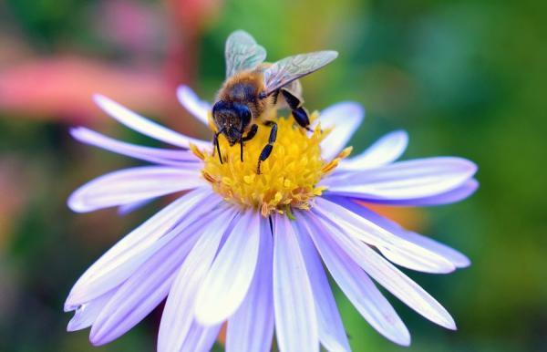 Plantas y flores que atraen abejas