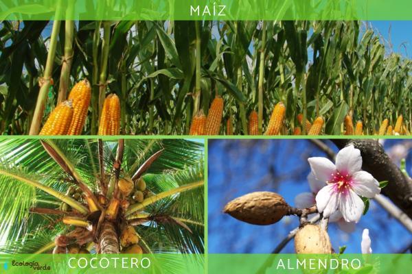 Plantas monoicas: qué son, características y ejemplos - Ejemplos de plantas monoicas