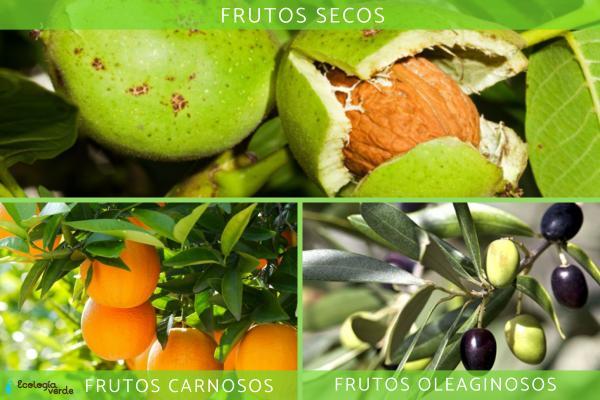 Tipos de frutos - Clasificación de los frutos según el tipo de pericarpio