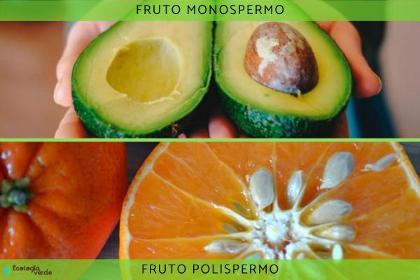 Tipos de frutos - Tipos de frutos según la cantidad de semillas que contienen