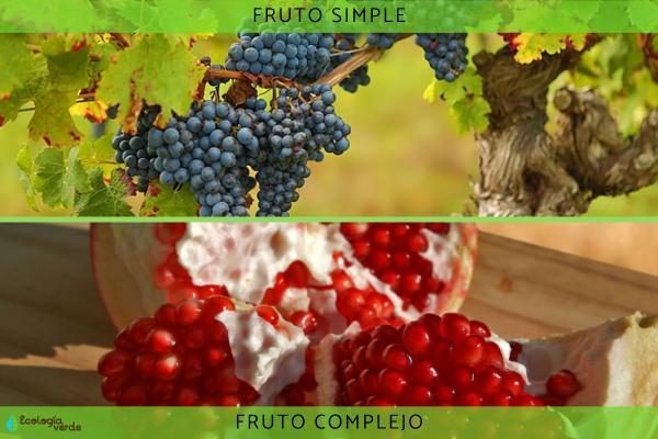Tipos de frutos - Tipos de frutos según las partes de la flor que lo forman