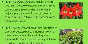 Diferencia entre plantas vasculares y no vasculares