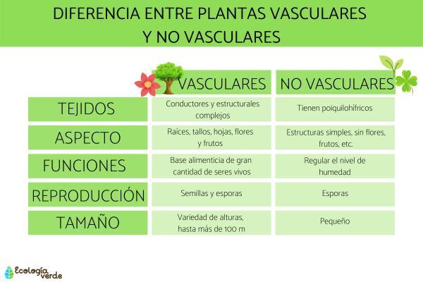 Diferencia entre plantas vasculares y no vasculares - Principales diferencias entre plantas vasculares y no vasculares