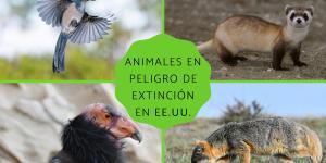 Animales en peligro de extinción en Estados Unidos