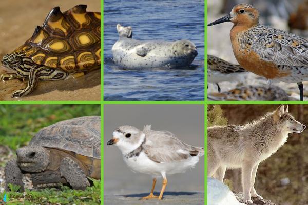 Animales en peligro de extinción en Estados Unidos - Otros animales en peligro de extinción en Estados Unidos