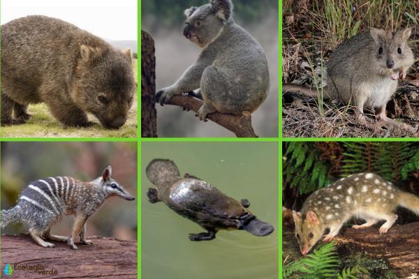 Animales en peligro de extinción en Australia - Otros animales en peligro de extinción en Australia