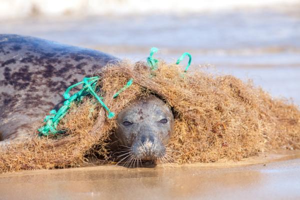 Cómo afecta la contaminación del agua a los animales marinos