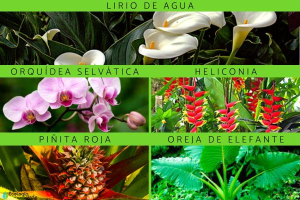 Flora y fauna de la Selva Peruana - Flora de la Selva Peruana