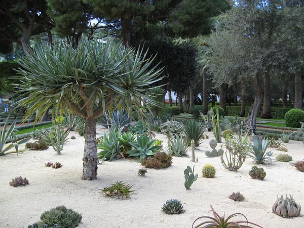 11 tipos de jardines - Jardín sostenible o xerófilo
