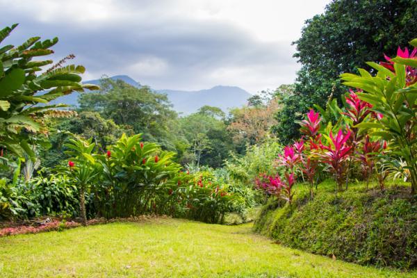 11 tipos de jardines - Jardín tropical
