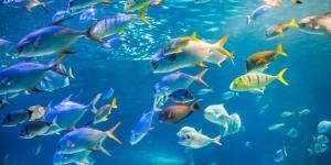 Aguas oceánicas: qué son, características e importancia