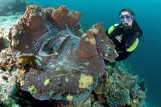 Qué animales viven más años - Las almejas oceánicas