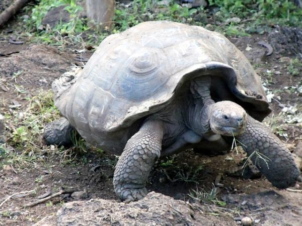 Qué animales viven más años - Las tortugas que viven 100 años o más