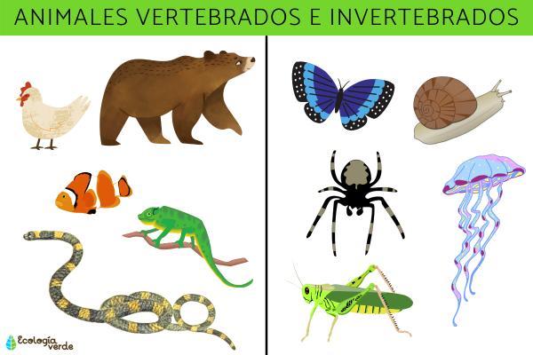 Animales vertebrados e invertebrados: características, ejemplos y diferencias