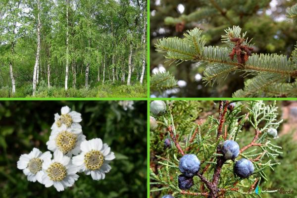 Flora y fauna de los Pirineos - Flora de los Pirineos