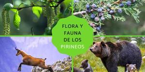 Flora y fauna de los Pirineos