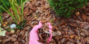 Cómo hacer un acolchado para plantas o mulching
