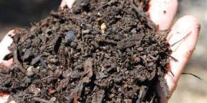 Qué son los fertilizantes y sus tipos