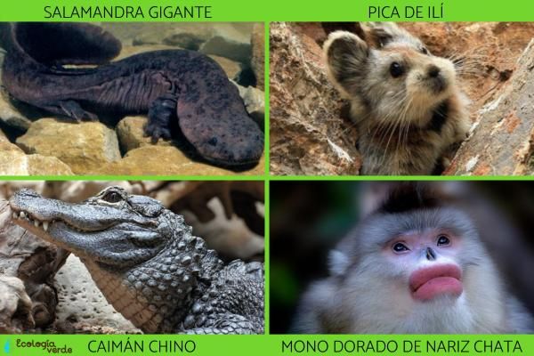 Flora y fauna de China - Animales en peligro de extinción en China