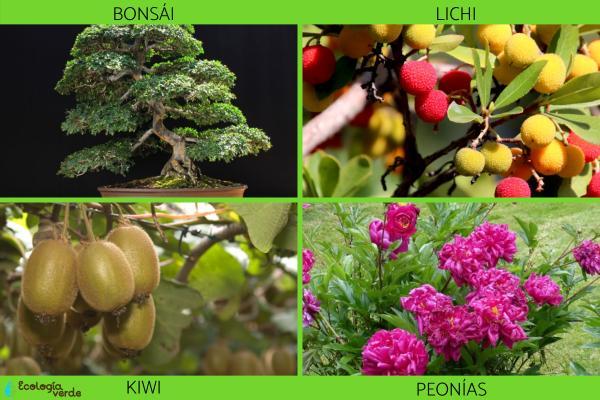 Flora y fauna de China - Flora de China