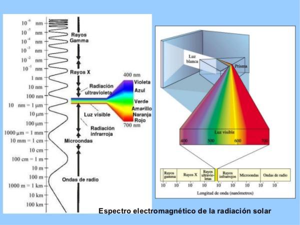 Pigmentos fotosintéticos: qué son, tipos y ejemplos - Qué son los pigmentos fotosintéticos