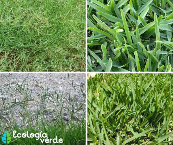 Plantar grama: cómo hacerlo - Tipos de grama para plantar en casa