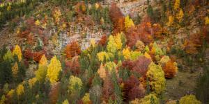 Bosques caducifolios: características, flora y fauna