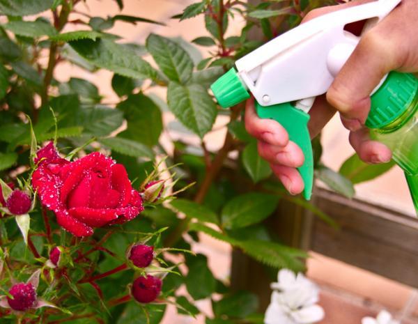 Cómo hacer jabón potásico - Dónde comprar jabón potásico o potasa