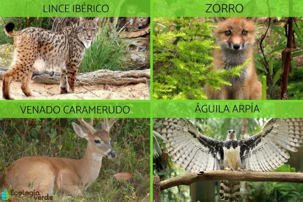 Ecosistema forestal: qué es, características, flora y fauna - Ecosistema forestal: fauna