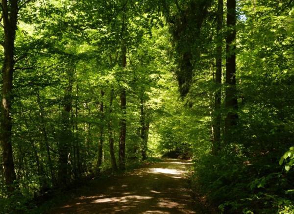 Ecosistema forestal: qué es, características, flora y fauna