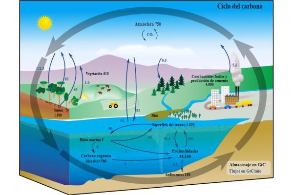 El ciclo del carbono: qué es, cómo funciona y su importancia