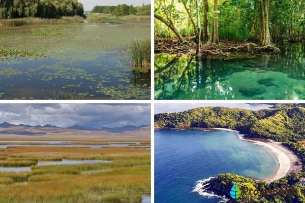 Types d'écosystèmes - Définition, classification et exemples - Écosystèmes mixtes