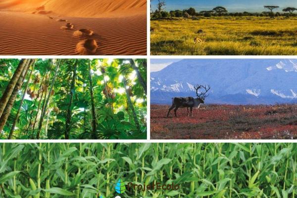 Types d'écosystèmes - Définition, classification et exemples - Écosystèmes terrestres et leurs types