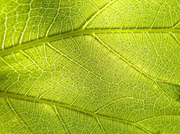 Respiration des plantes - Comment respire une plante - Par où respirent les plantes ?