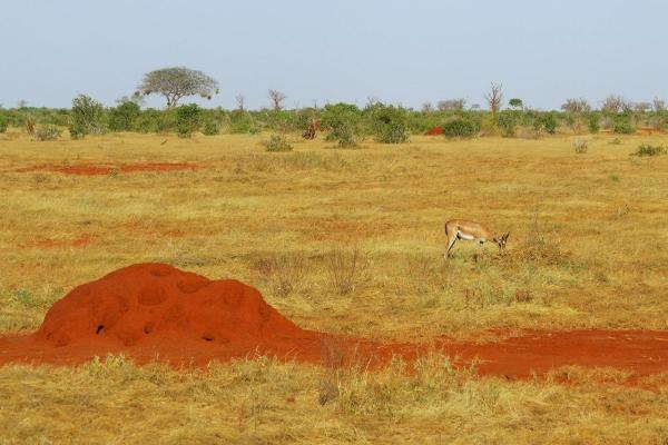 Quels animaux vivent dans la savane africaine ? - Noms et photos - Insectes de la savane africaine