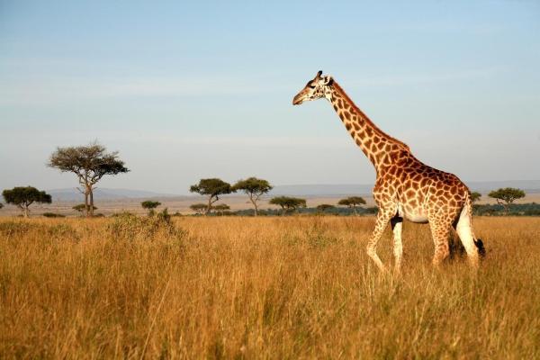Quels animaux vivent dans la savane africaine ? - Noms et photos